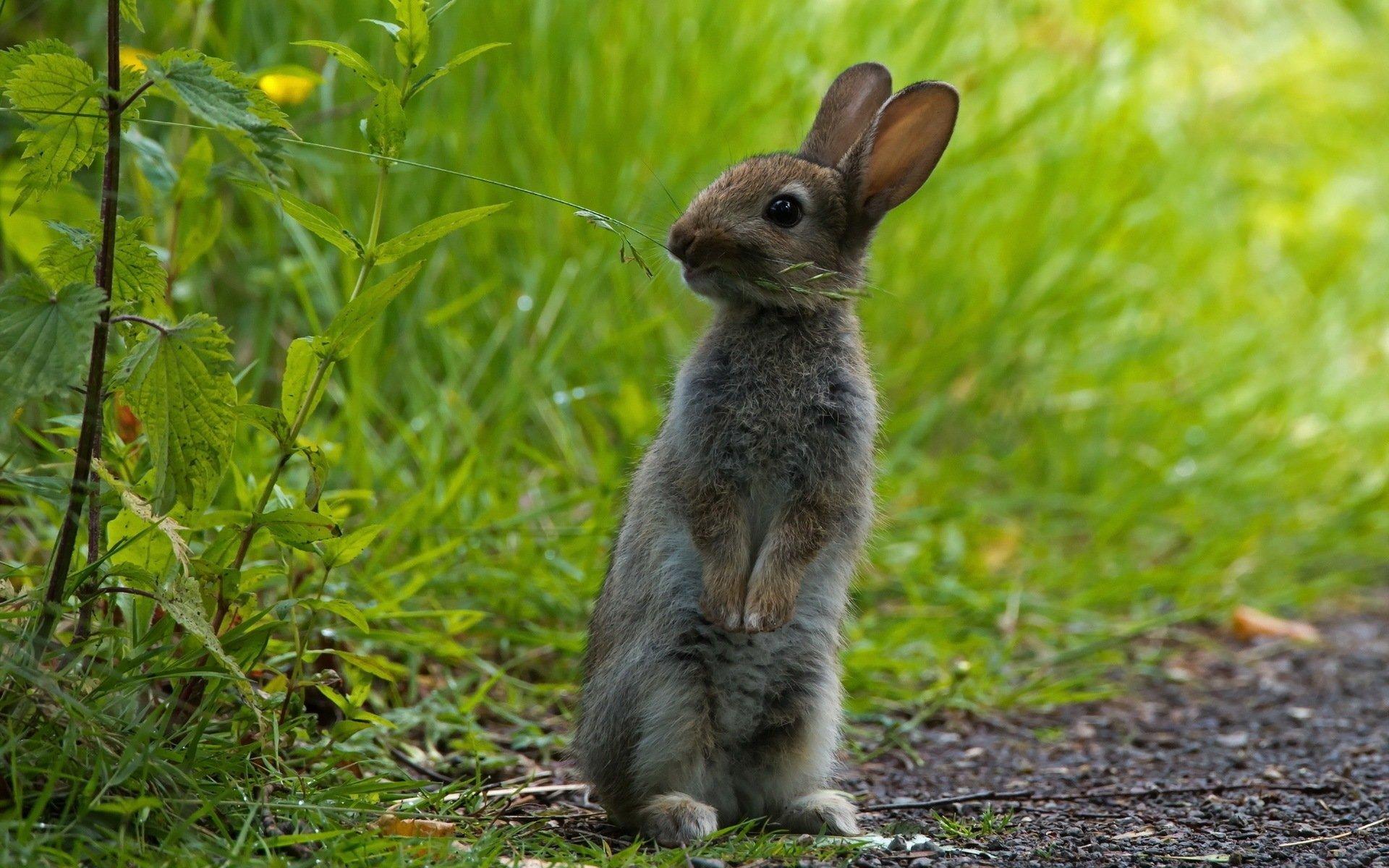 Cute Rabbits Wallpapers Hd Lapin Full Hd Fond D 233 Cran And Arri 232 Re Plan 1920x1200
