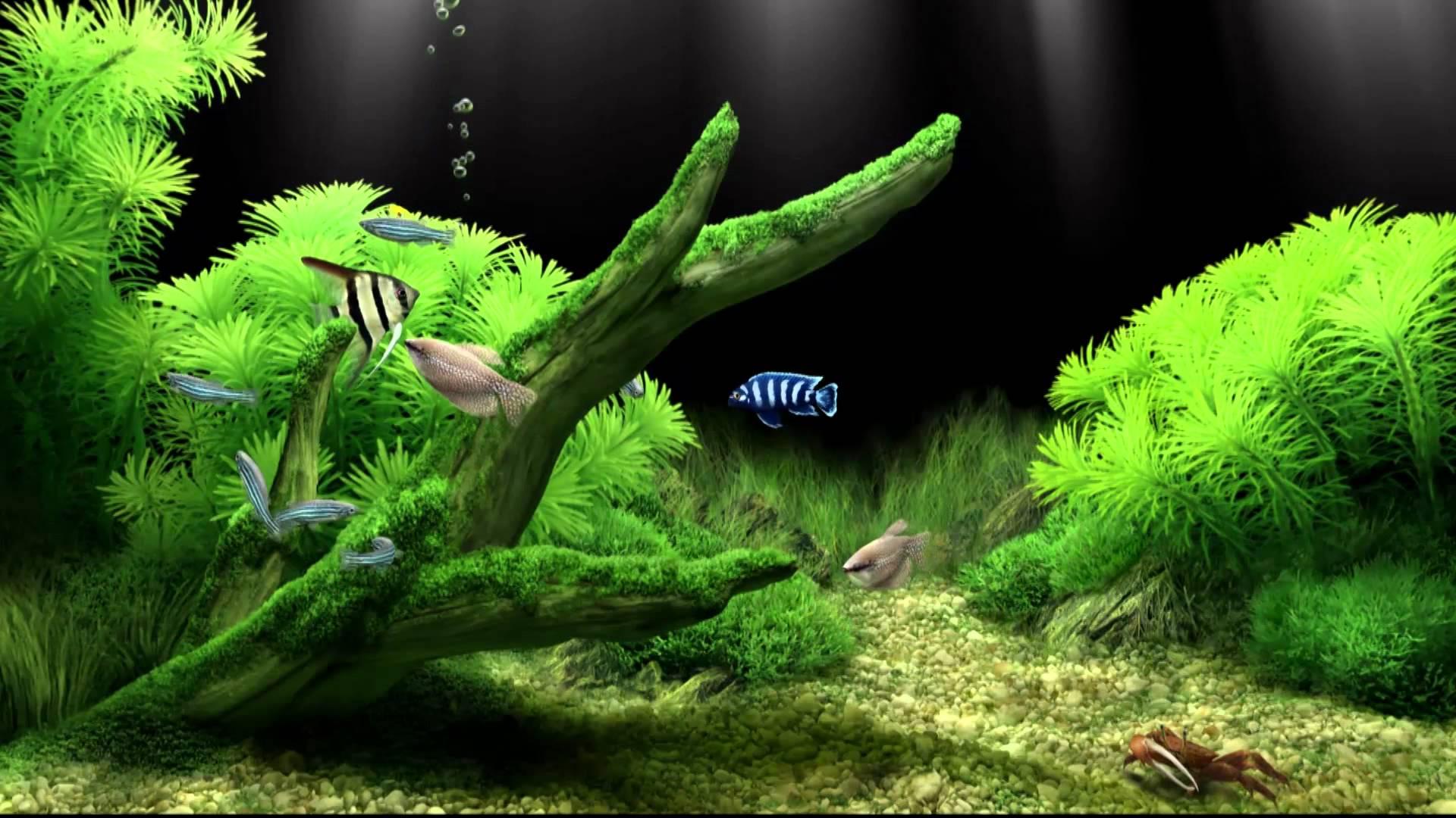 Koi Fish 3d Animated Wallpaper Poisson Fond D 233 Cran Hd Arri 232 Re Plan 1920x1080 Id