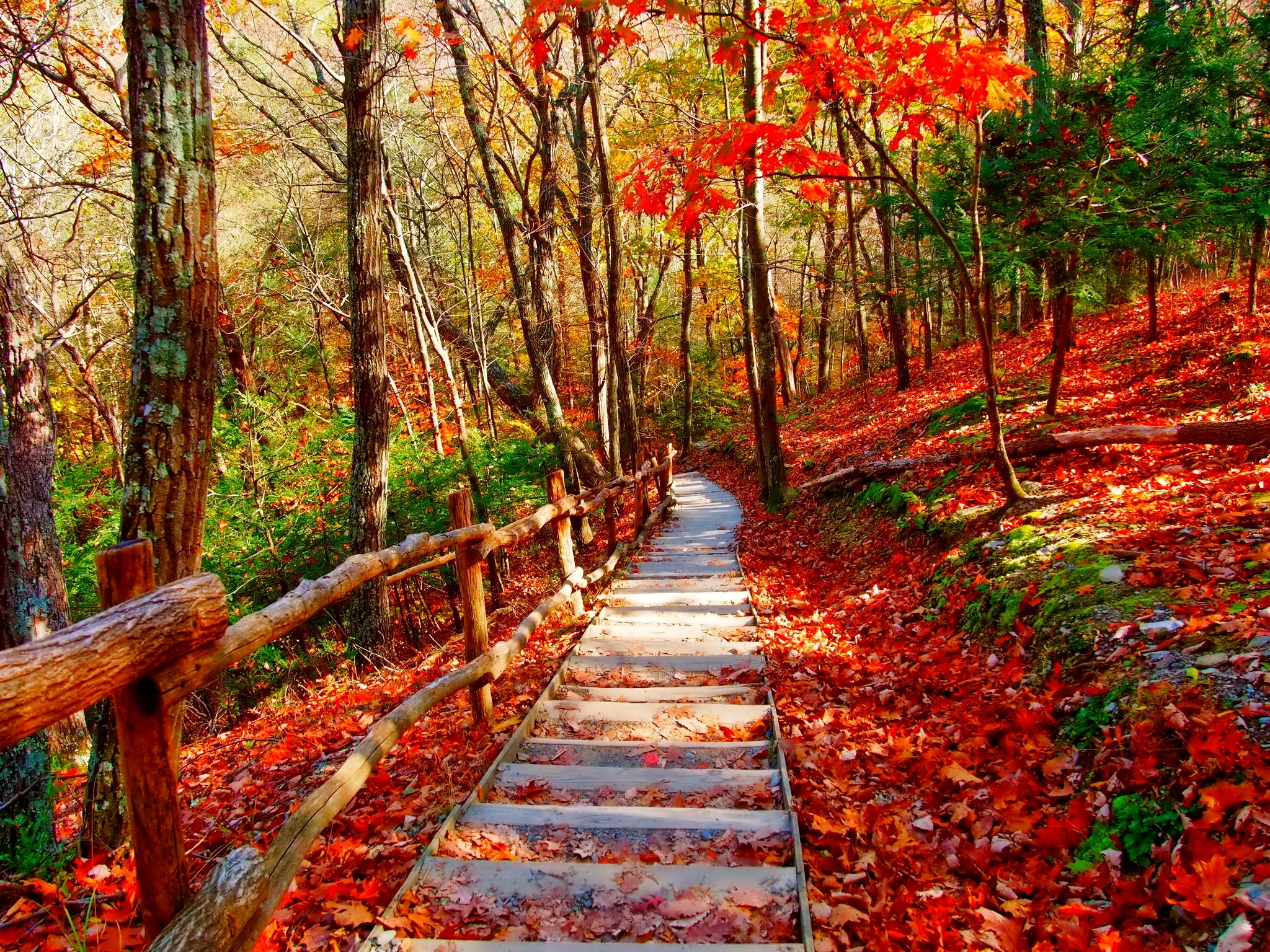 Fall Wallpaper For Large Monitors Autumn Forest Path Fond D 233 Cran Hd Arri 232 Re Plan