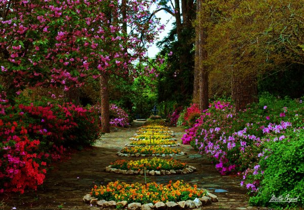 flower garden hd wallpaper background
