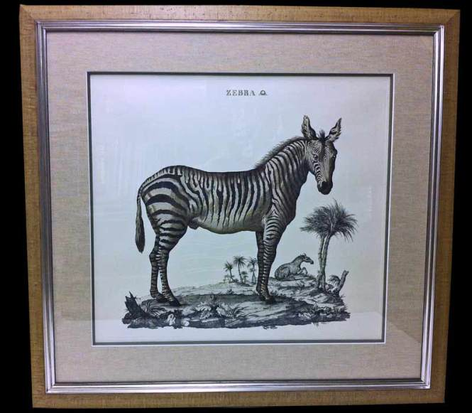 Framed Zebra Pictures Choice Image - origami instructions easy for kids