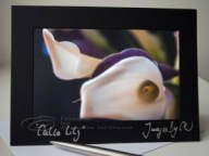 photo greeting card, flower card, calla lily
