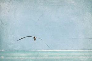 flying seagull bonaire ocean waves grunge look