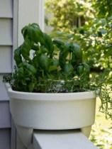 Herbs - where they belong to grow