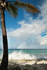 ocean, rainbow, palmtree
