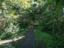 Rail trail in Kittatinny Valley State Park