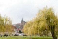 prague, old town, Castle