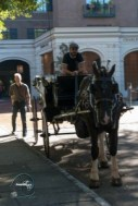 Charleston horse carriage tour