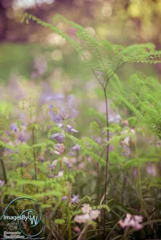 fern, flower