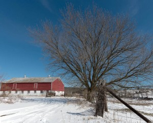 Red Barn & Tree - winter