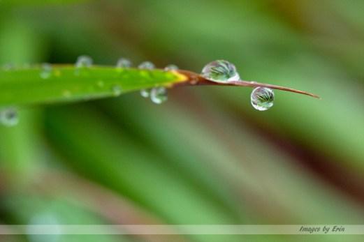 Rain drop 4