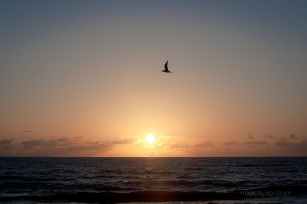 indialantic beach at sunrise, 3/17/12