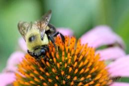 Bee1893 web