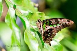 GreenBfly2299-Editcrp