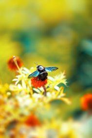 blue bug
