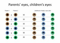 Color of the baby's eyes - BabyCenter