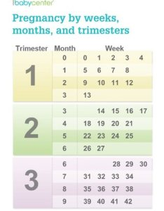 Pqguqz fz nuz cz  bg smqtssjlsc lgg also chart on how many months pregnant babycenter rh communitybycenter