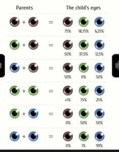 vdddevd fl vgafyt nqigwp   lgg also baby   eye colour chart page babycenter rh communitybycenter