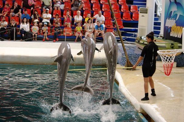делфинариум / Dolphinarium