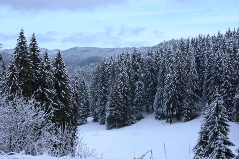 Photo: wikipedia - Pamporovo