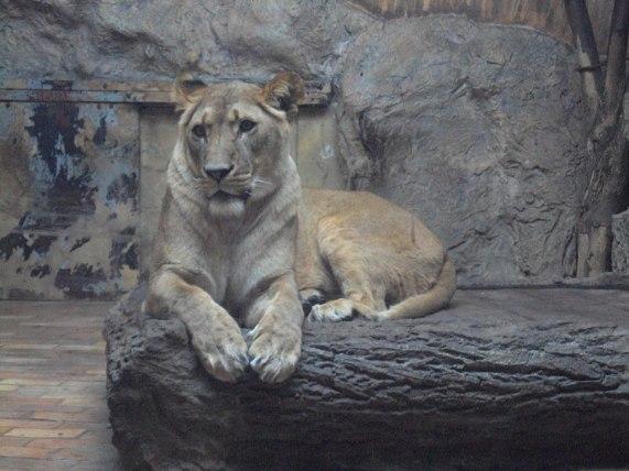 зоопарк София zoo Sofia