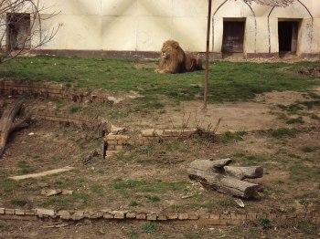 Sofia_Zoo Зоо София
