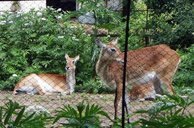 Sofia_Zoo зоологическа