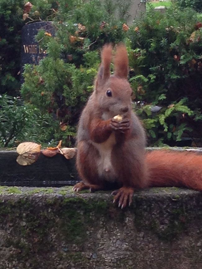 Squirrel, scoiattoli a Berlino