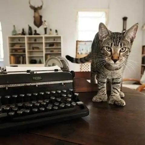 obdb - 8 destinos perfectos para cualquier amante de los gatos