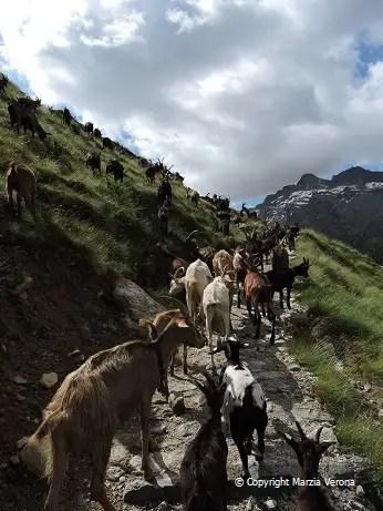 (Val d'Aosta)