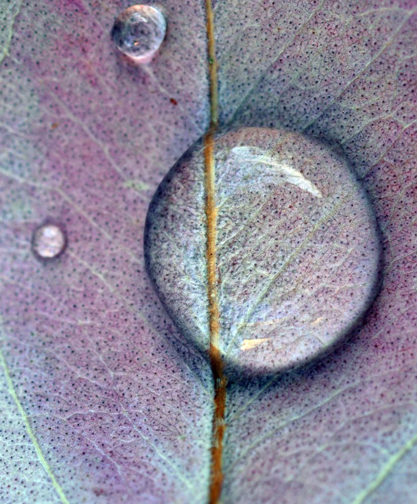 Copyright:  Greg Joder.  Water Drop on Leaf.