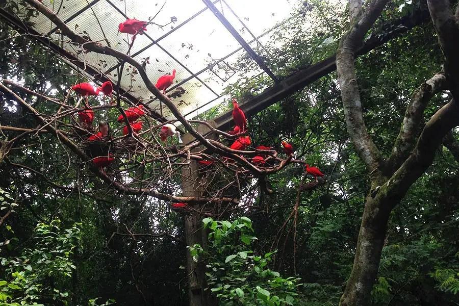 Para mim, o mais legal de Foz do Iguaçu foi o Parque das Aves! É como se você entrasse em um grande viveiro! http://petitandy.com