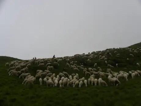 datazione pastore Consiglio