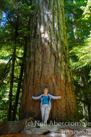 Cathedral Grove-2