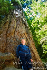 Cathedral Grove-3
