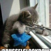 Le chaton, figure ironique de la censure