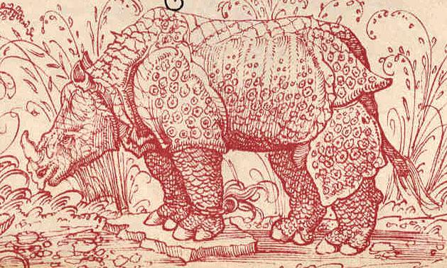 Altdorfer, rhinoceros d'après Burgkmair, 1515.