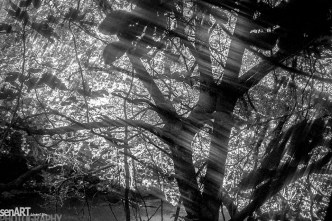 nr009_1999aacq16 © LEVENT ŞEN