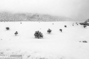 2016yds_sen6759 © LEVENT ŞEN