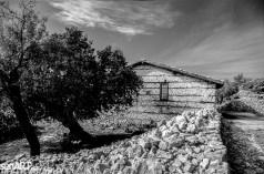pr2016aaef_16 © LEVENT ŞEN