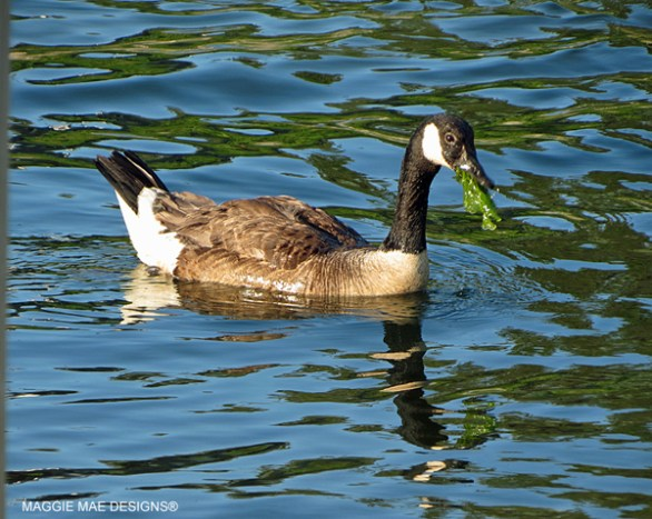 Blog-Bird365