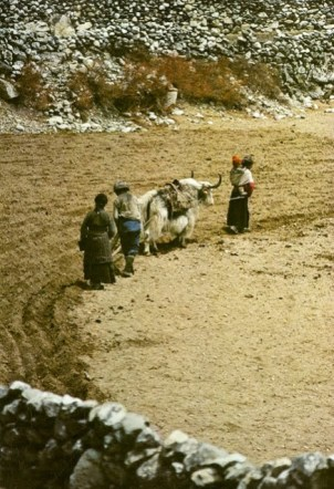 Daily life in the Himalayas (65)