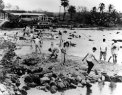 1950s-Haleiwa-shows people catching stranded fish during the receding tsunami at Hale'iwa.