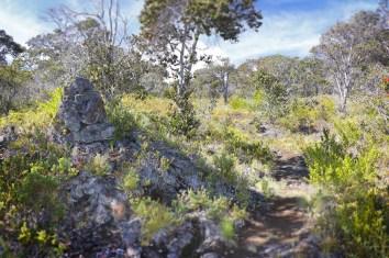 Ainapo_Trail-DLNR