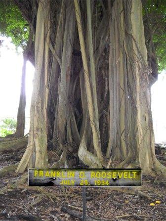 Banyan Drive Tree-FDR