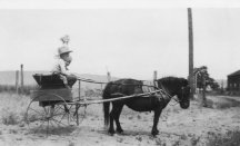 Bill Anderson-horse-cart-AdamWest