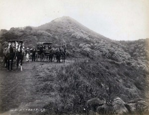 Buggies on Mt. Tantalus, Honolulu, 1900s.