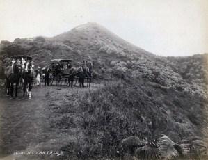 Buggies on Mt. Tantalus, Honolulu, 1900s.