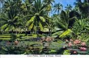 Coco_Palms-Lagoon-postcard
