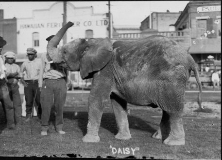Daisey the Elephant-PP-2-12-004